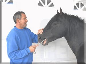 erfolgreich als Pferdedentist