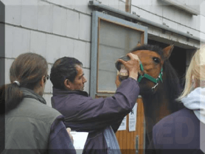 praktizierte Pferdedentistik